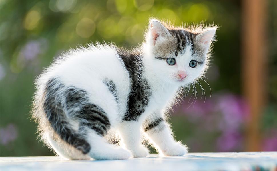 Les photos de chatons ont tendance à émouvoir davantage les gens, ce qui explique pourquoi ils ont